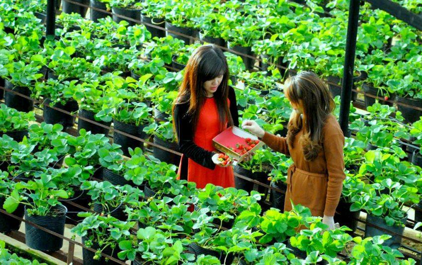 Dịch vụ du lịch, ngắm cảnh, ăn uống tại vườn rau, cây trái
