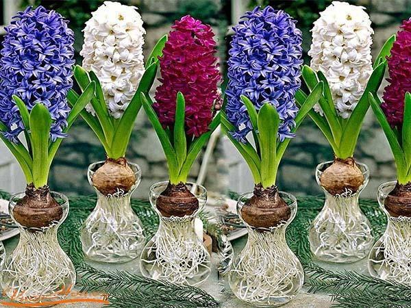 Trồng các loại hoa sống trong nước